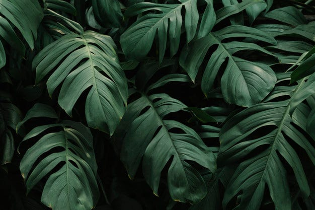 Tropical green leaves background Free Photo