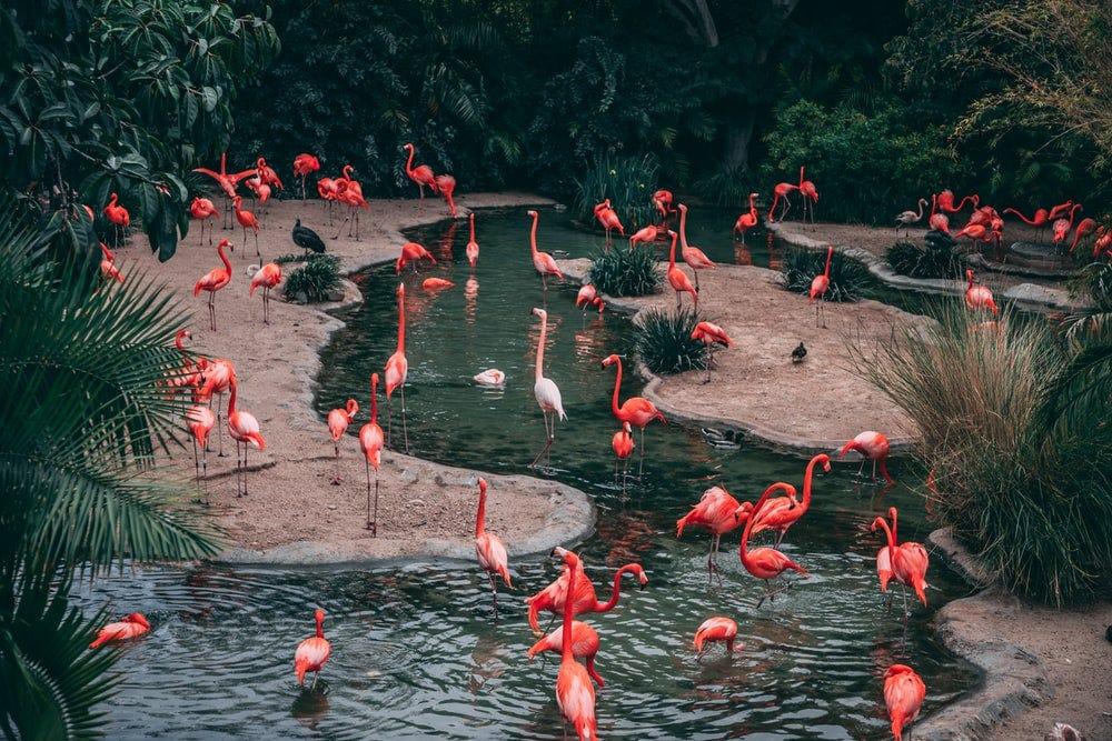 wildlife photography flock of flamingo