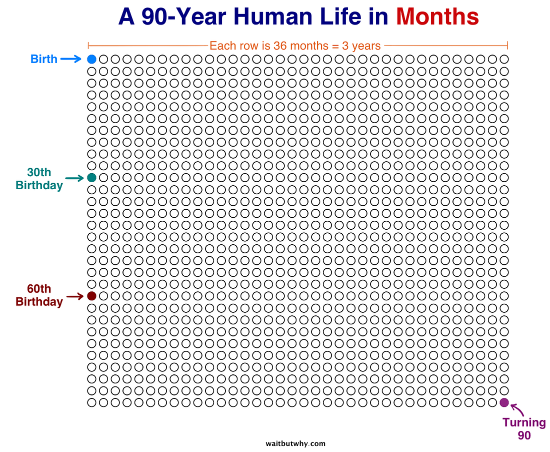 A Human Life in Months