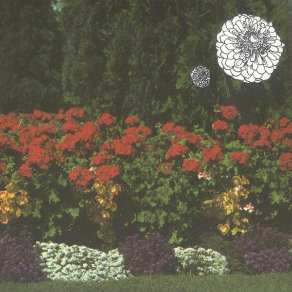Imaginary Softwoods: Annual Flowers In Color Album Review   Pitchfork