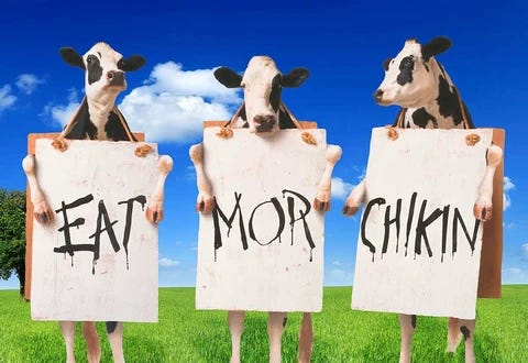I've previously argued that meat-eaters concerned about animal welfare should try to eat beef, not chicken. The logic goes: the average cow is very bi