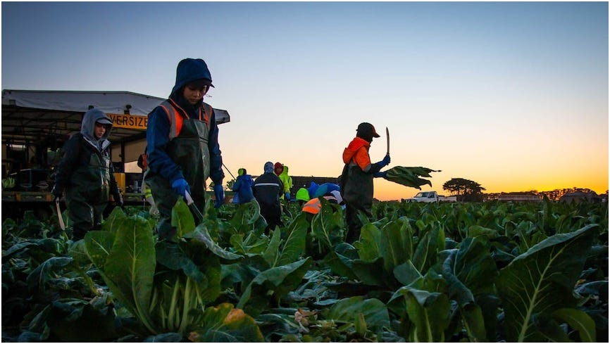 Australia Opens Gate for Asean Ag Workers