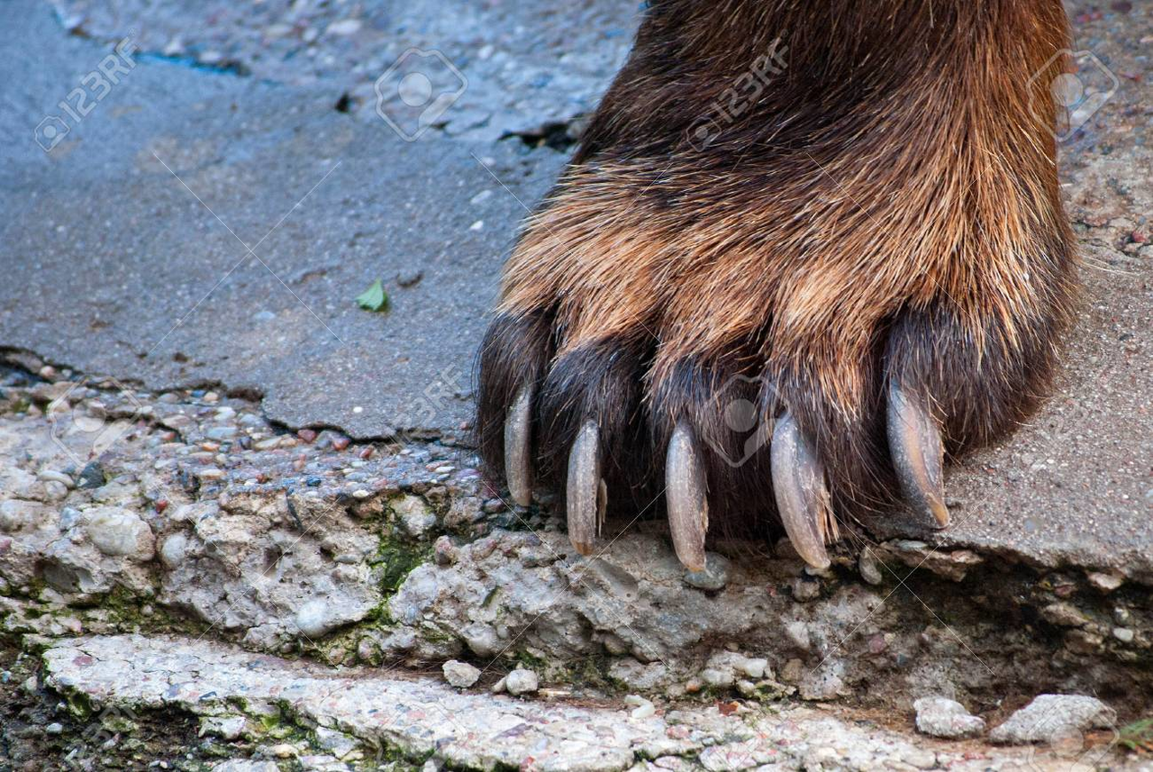 The Strong Paw of Reason