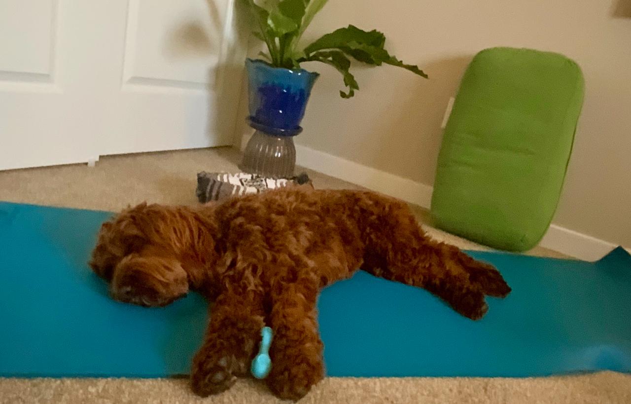 TL Yoga Don'ts