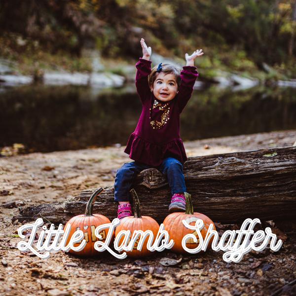 Little Lamb Shaffer