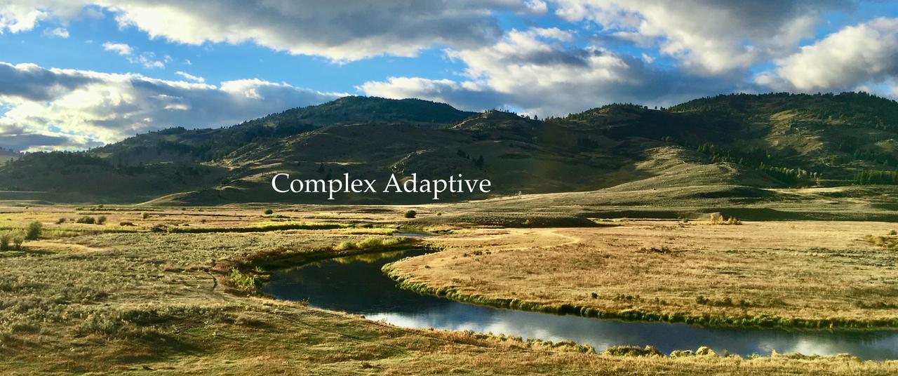 Complex Adaptive