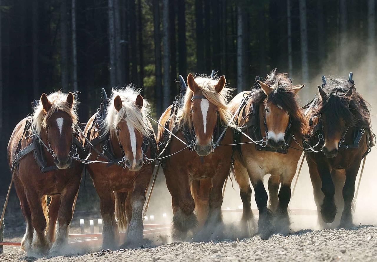 Regular Horses