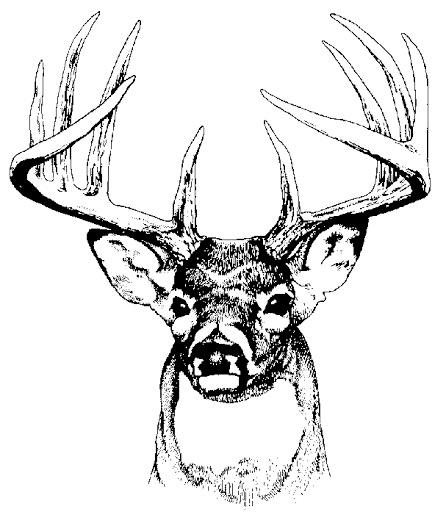Buck on Software