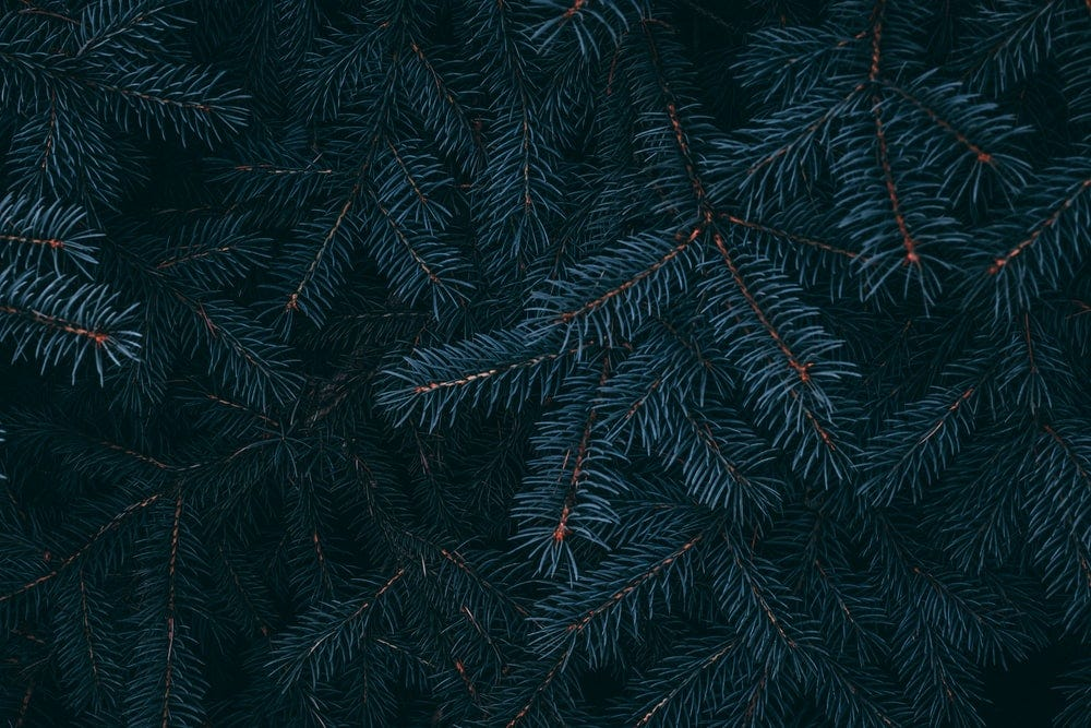 green pine tree with red leaves