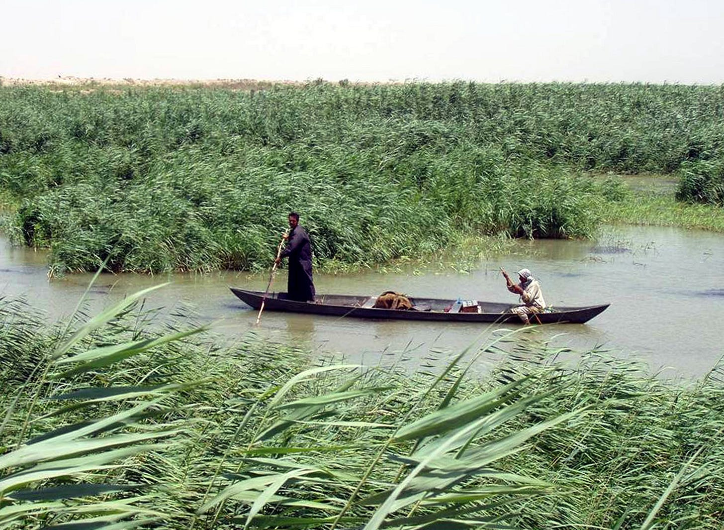 Image result for southern iraq marshes