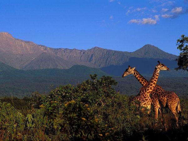 maasai-giraffe-mt-meru_11967_600x450