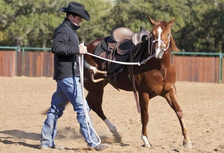 Breaking A Horse: Stages, When, How Long, How to & Cost?