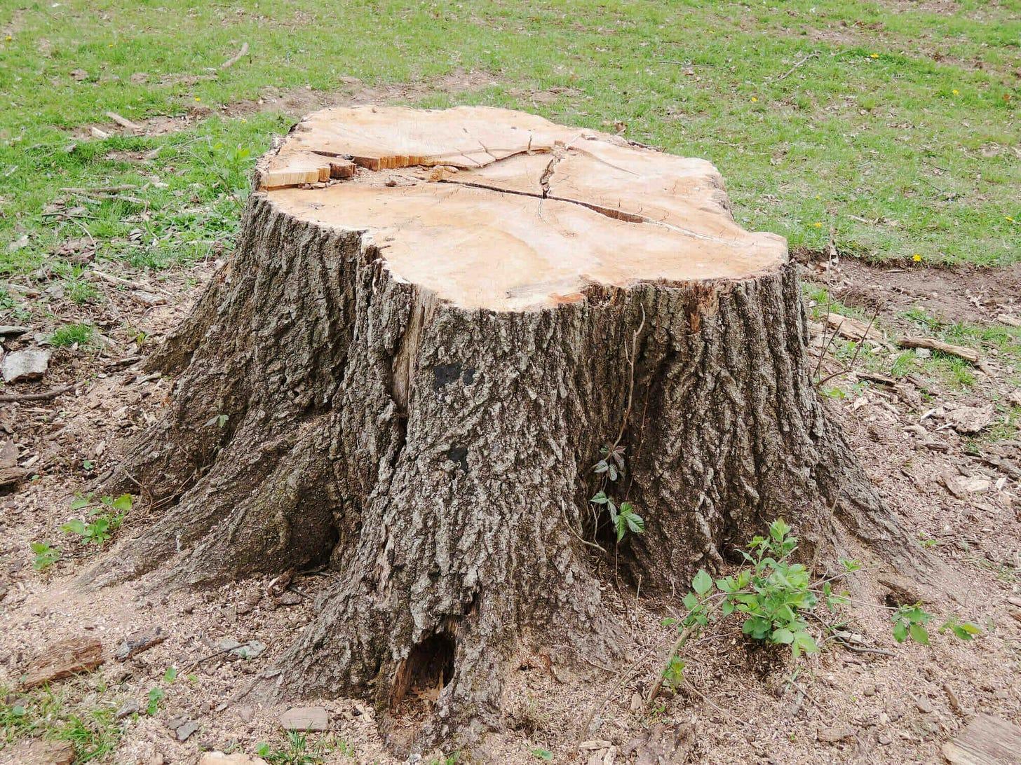 Tree Stump Removal Reasons | Reasons To Remove A Tree Stump