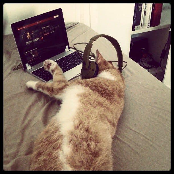 Found my cat watching netflix this morning - Imgur