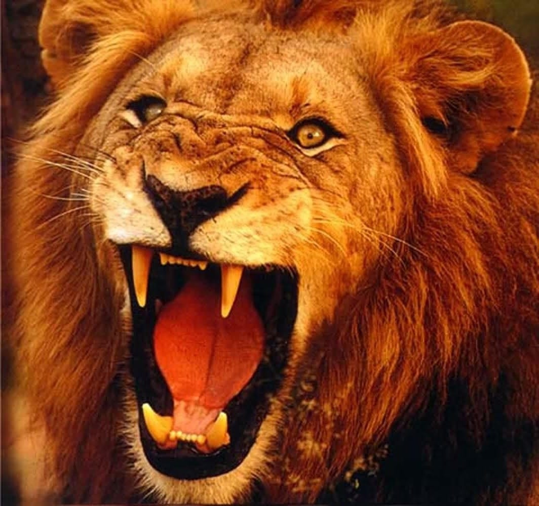 Defeat that roaring lion | | Here's the Joy