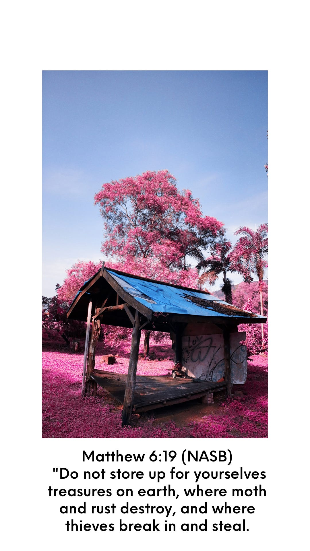 wooden shed in front of pink coloured foliage with Bible verse Matthew 6:19 NASB Do not store up for yourselves treasures on earth, where moth and rust destroy, and where thieves break in and steal.