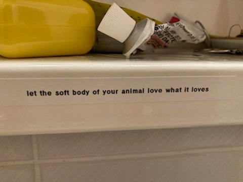 """Photo of a label on a shelf that reads """"let the soft body of your animal love what it loves"""""""