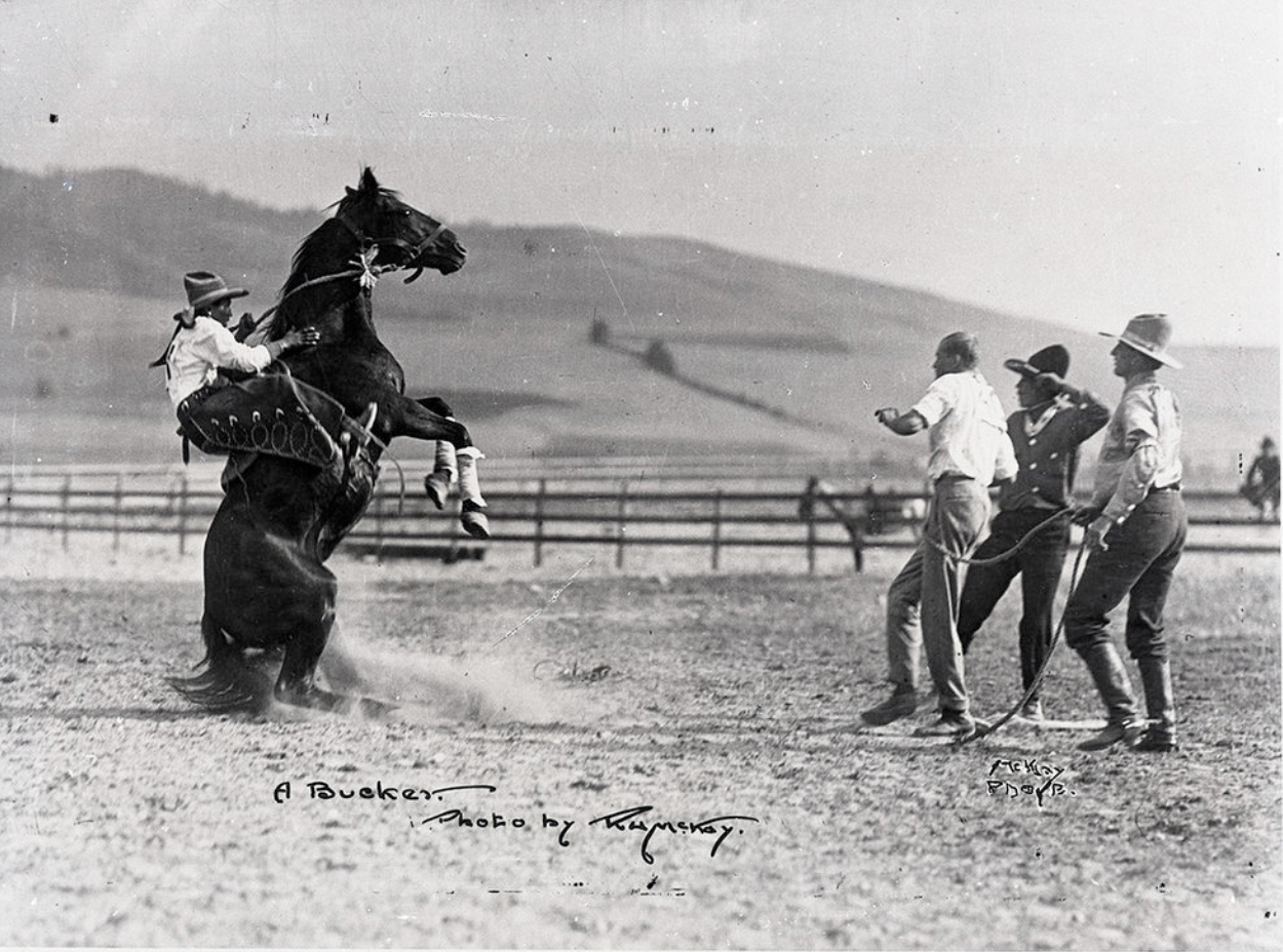 black and white photo of a bucking bronco, fully vertical with a rider struggling to hold on and three startled bystanders holding the other end of the rope)