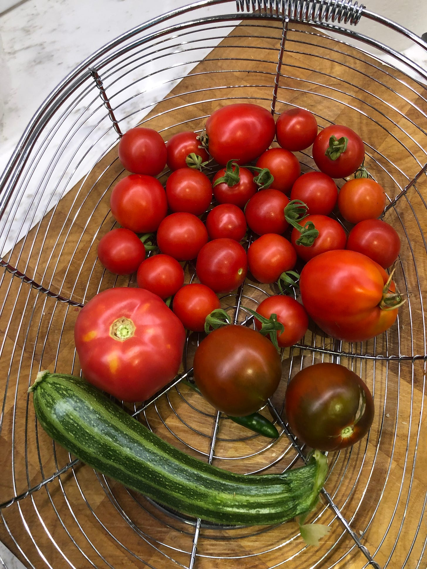 A garden basket filled with all sizes of tomatoes. Also one zucchini and a tiny Serrano pepper