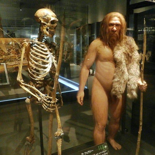 File:Skeleton and restoration model of Neanderthal La Ferrassie 1.jpg