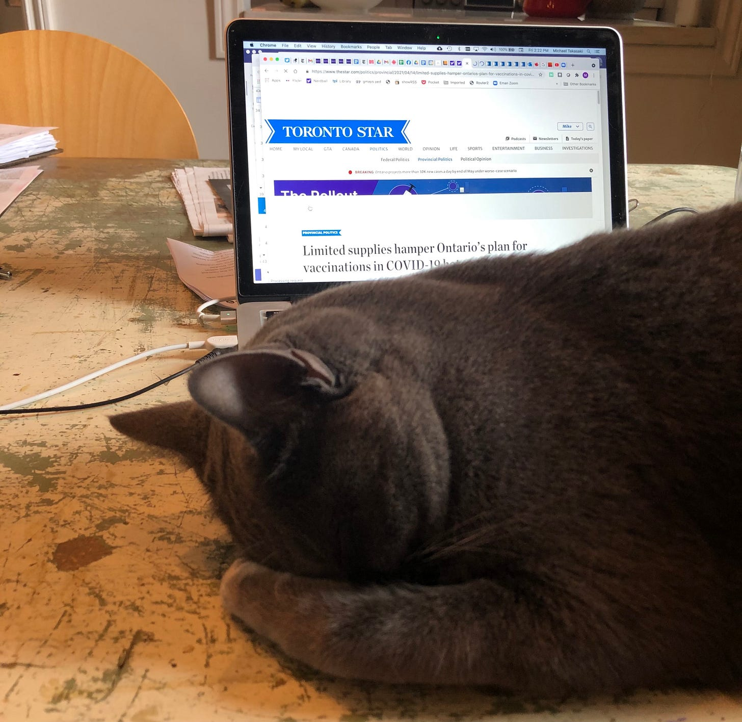 """A cat appears to be palming his face in disbelief. Behind him there's a laptop with a news article open. The headline reads, """"Limited supplies hamper Ontario's plan for vaccinations."""