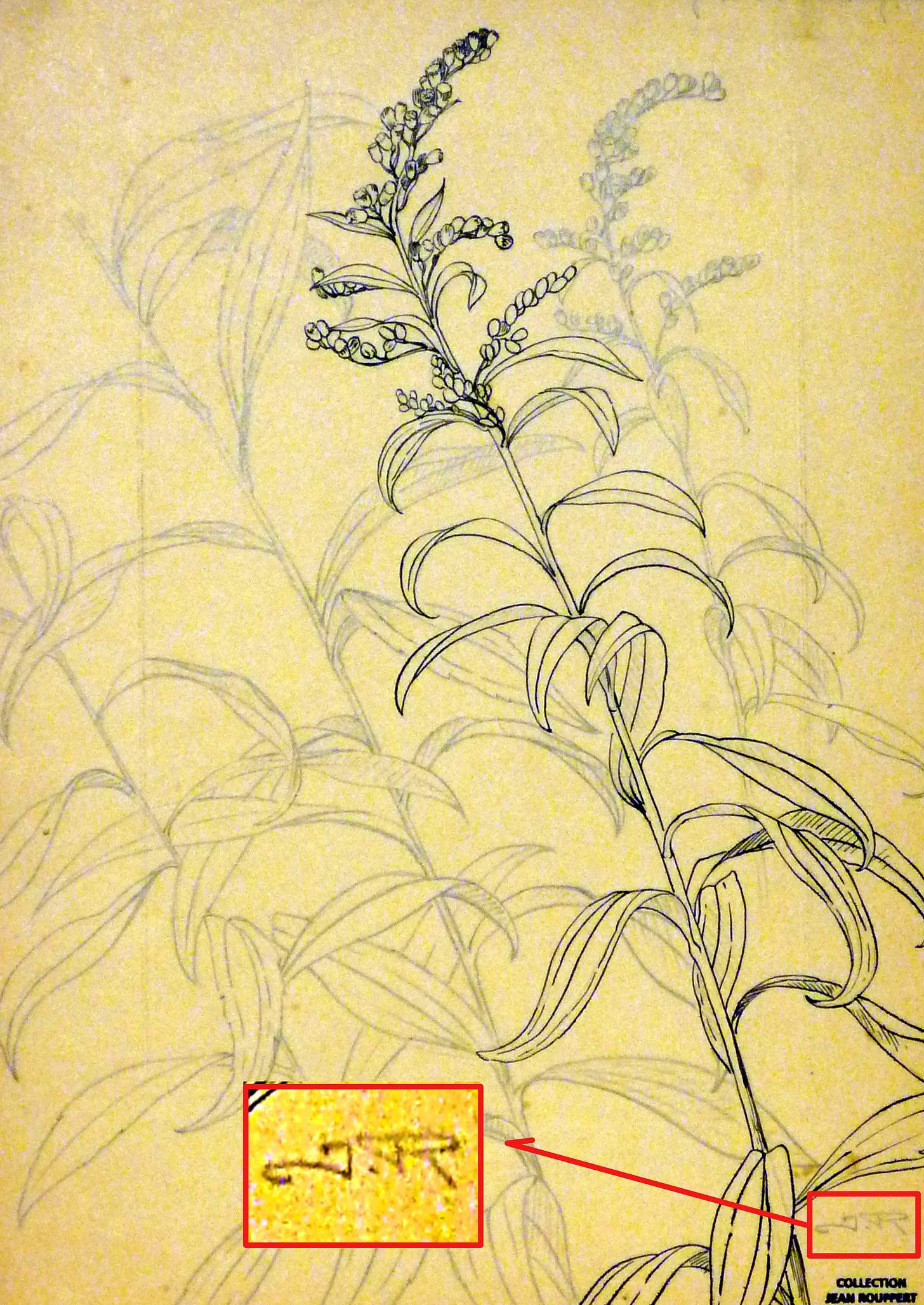 Jean Rouppert, Gerbe d'or, floral studies, pencil and ink on paper, signed, undated (private collection).