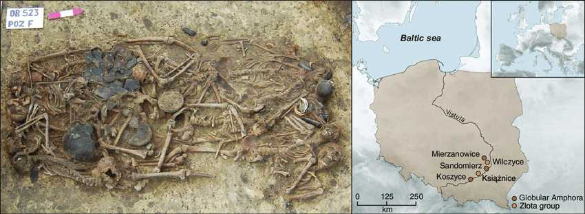 The mass grave at Koszyce, southern Poland. (A) Photograph of the 15 skeletons and grave goods buried at Koszyce site 3 (reproduced with permission from ref. 2). (B) Map of Poland showing the location of Koszyce and four other Globular Amphora/Złota group sites included in this study.