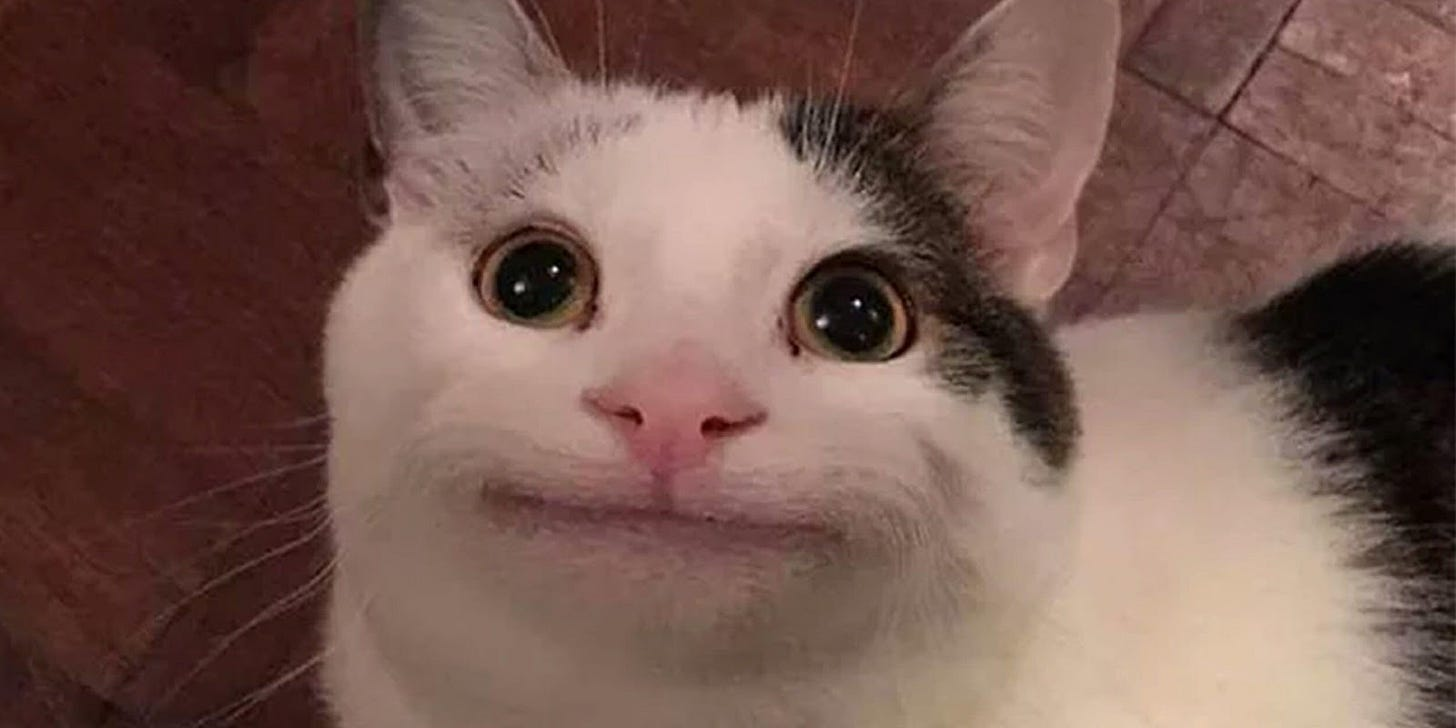 Polite Cat Meme: Is This Viral Image of ... | Cat memes, Cat expressions,  Cute cat memes