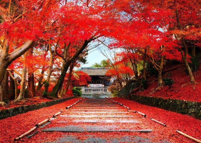 Fall Colors in Japan 2020: Best 8 Spots to See Japanese Maple Leaves (And  When to Visit)! | LIVE JAPAN travel guide