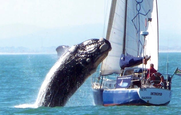 These photos were posted online by James Dagmore showing the yacht Intrepid being damaged by a whale off Cape Town