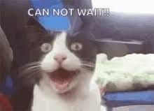 Excited Cat GIFs | Tenor