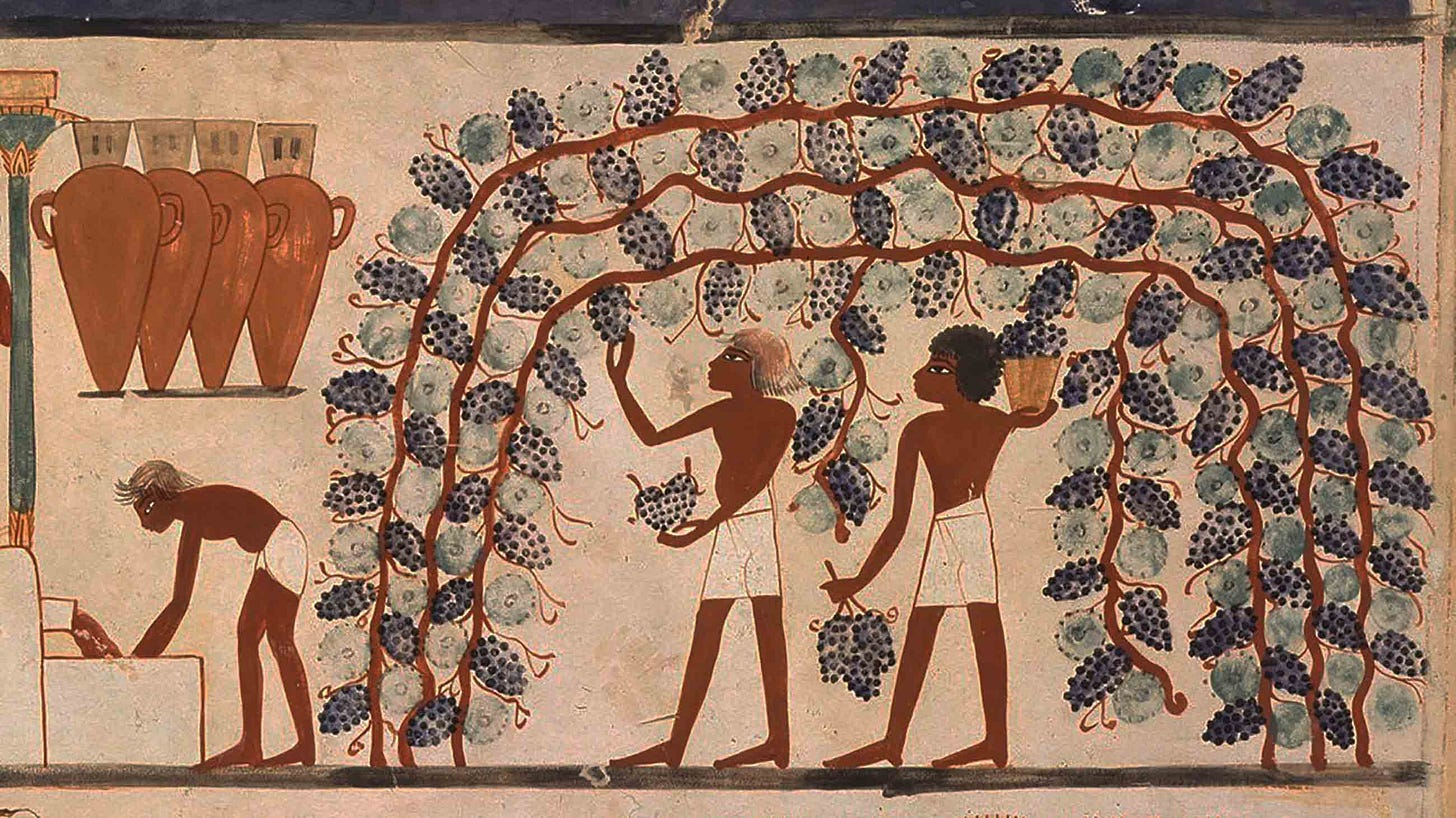 In Caves and Monasteries, Clues to Wine's Startling History