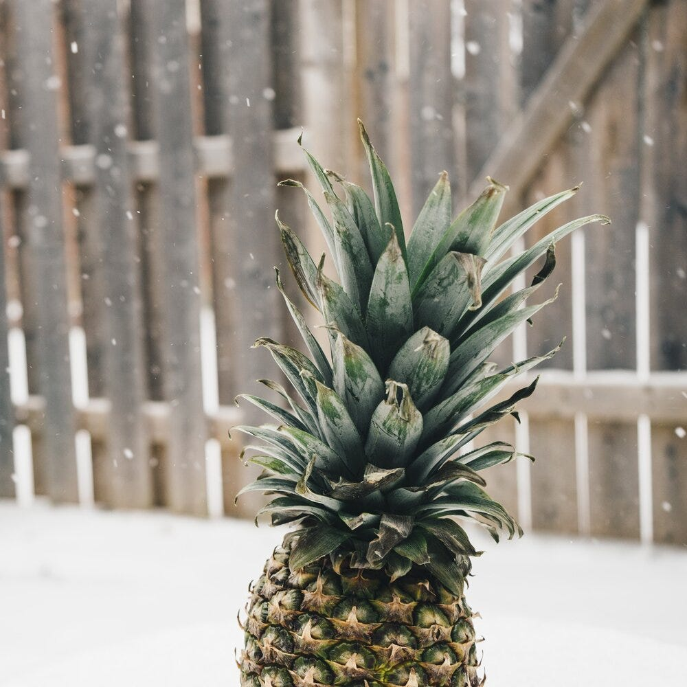 pineapple-supply-co-JNIRgI44koY-unsplash.jpg