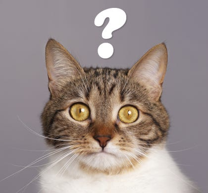National Answer Your Cat's Questions Day - PetMeds® Pet Health Blog