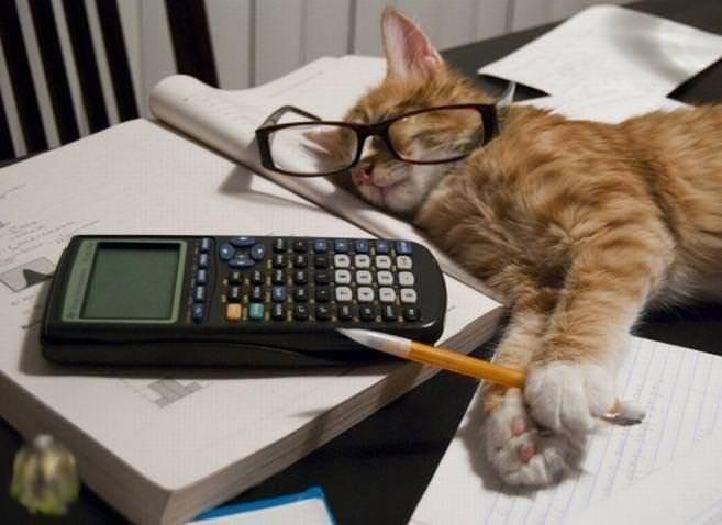 cat studying - Perth Cat Hospital