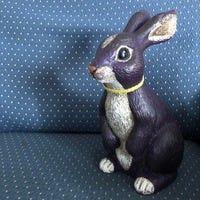 My pet rabbit named Rabbit.