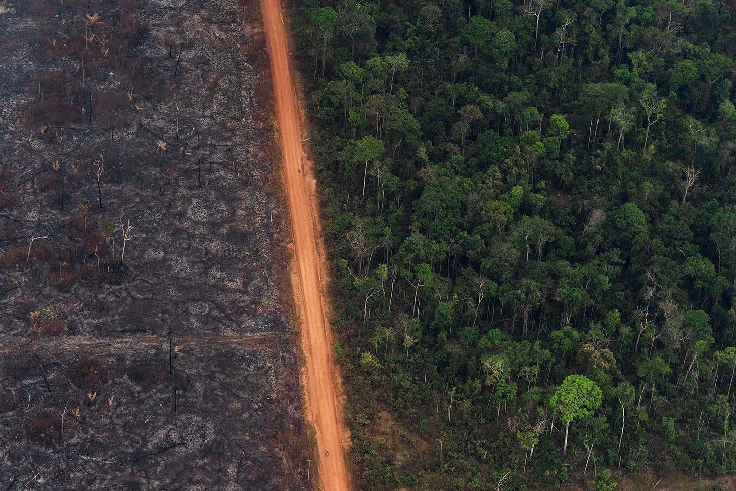 El Amazonas perdió 47 millones de hectáreas de bosque en los últimos 33  años - Infobae