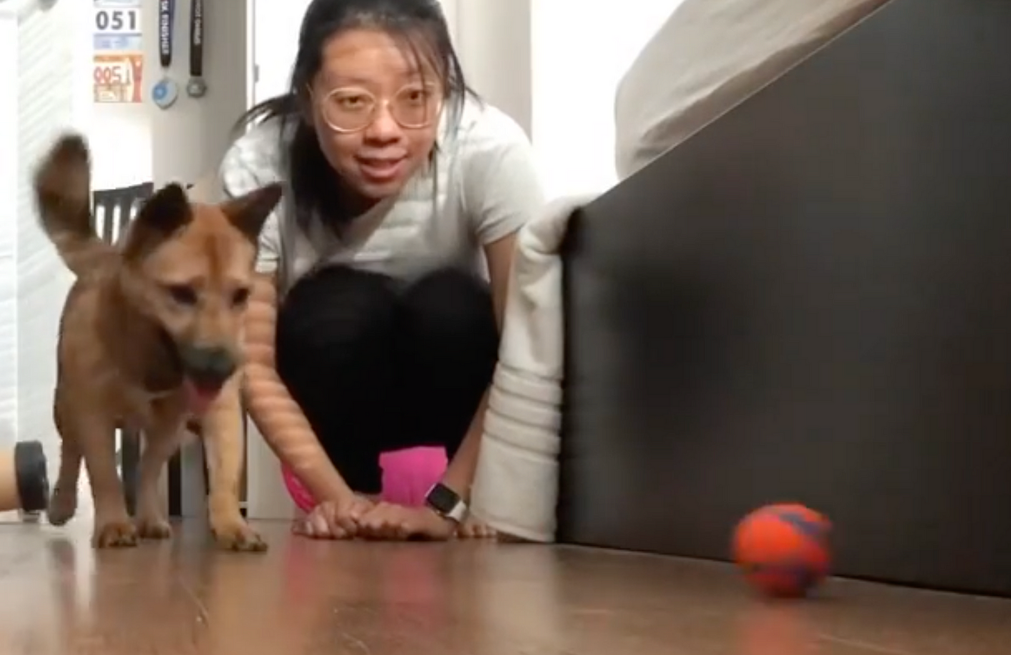 A small dog and a woman, looking excitedly at a ball nearby.