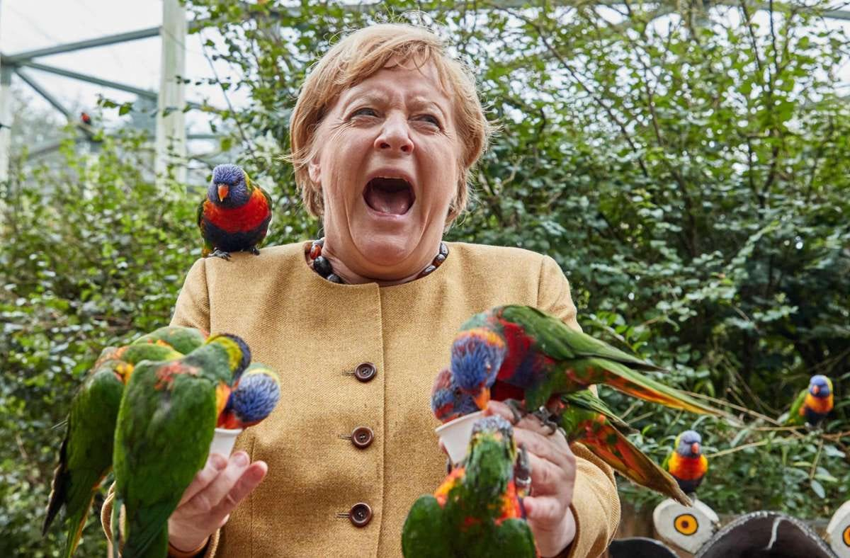 Angela Merkel screaming in agony but still in good spirits as she is slowly consumed by delightful, brightly colored parrots.