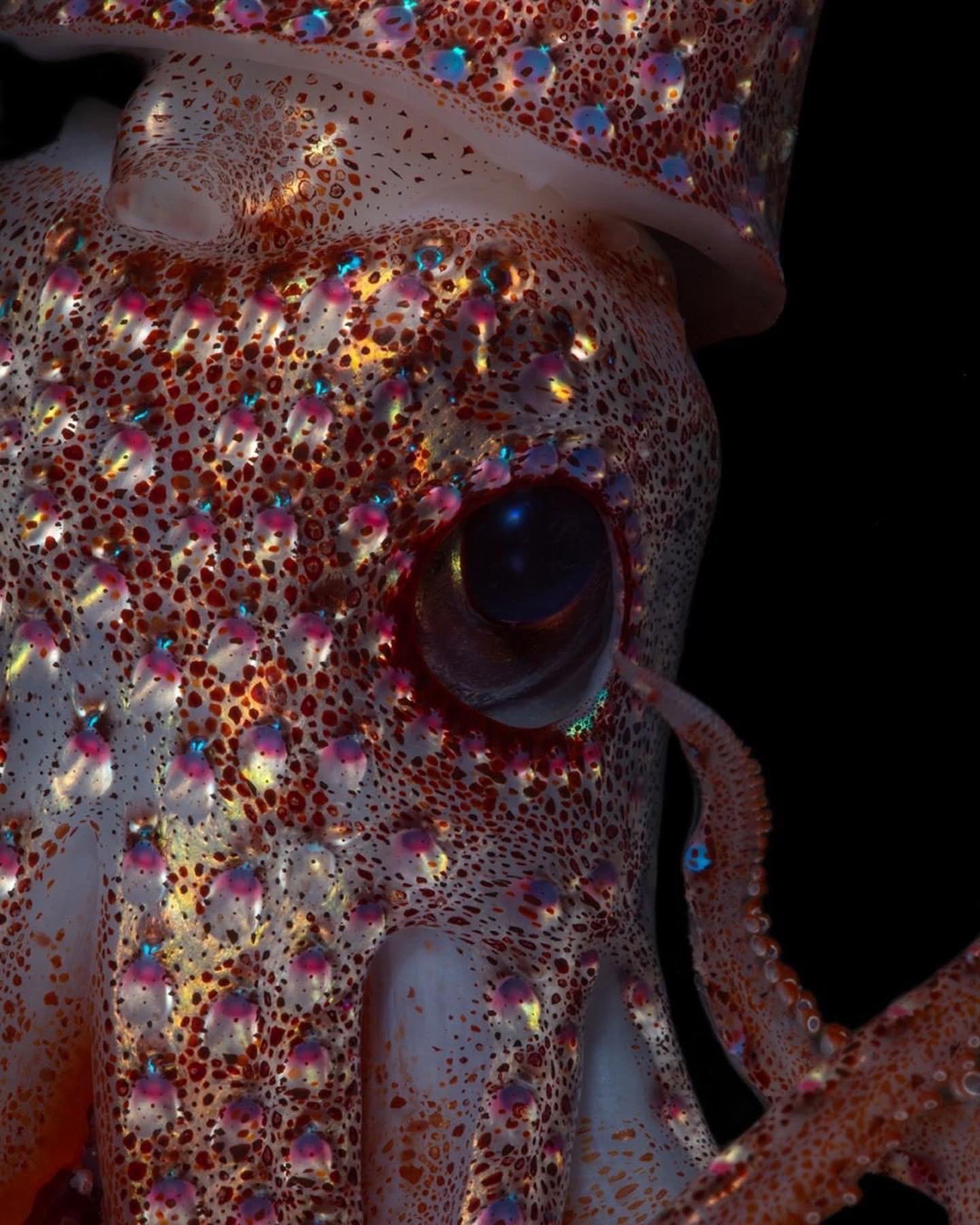 🔥 A strawberry Squid : NatureIsFuckingLit