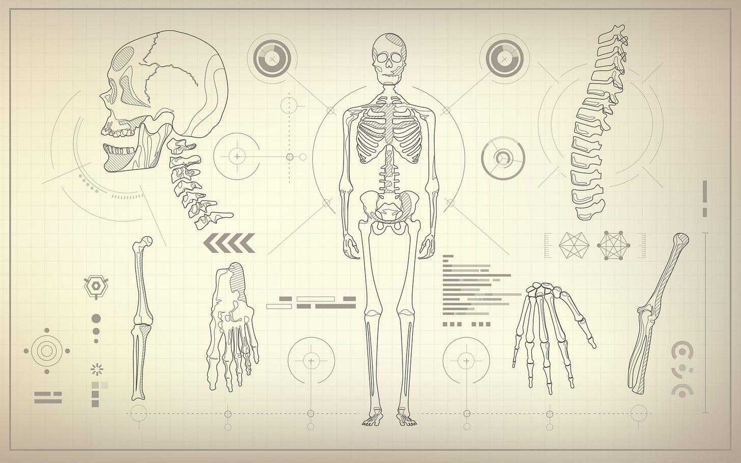 Skeletal diagrams