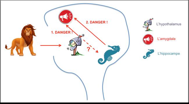 Stress cerveau reptilien amygdale
