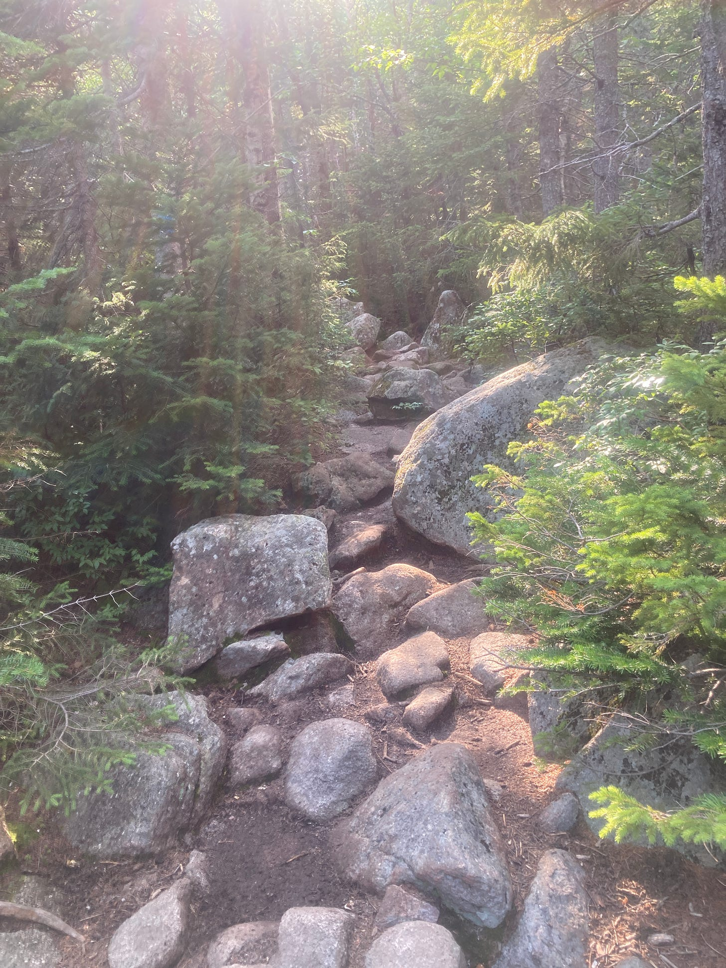 A rocky trail leaqds off into the deep woods, with sunbeams shining down. A blissfully tab-free environment.
