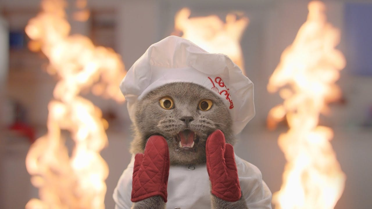 The Cat Cooking Show 2 - YouTube