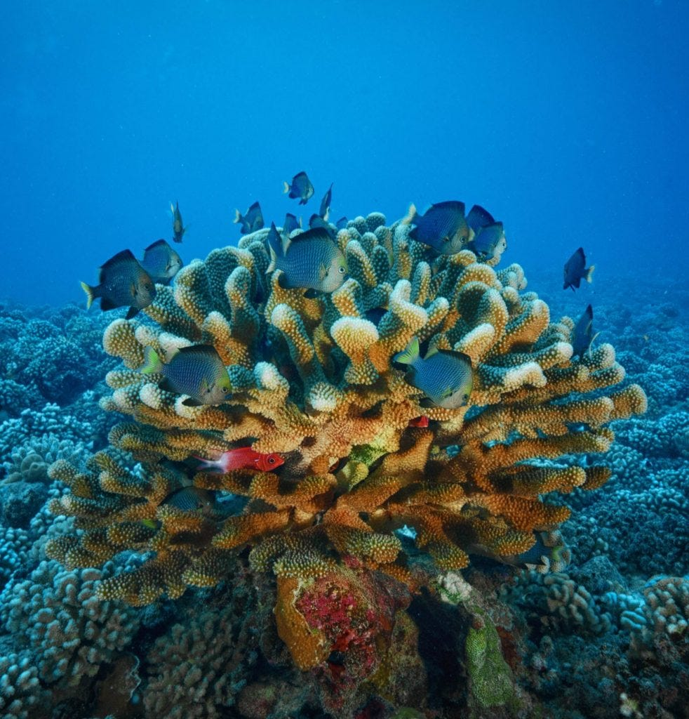 Bora Bora is a volcanic island.  It has Mount Otemanu.  It is surrounded by Motus and coral reefs
