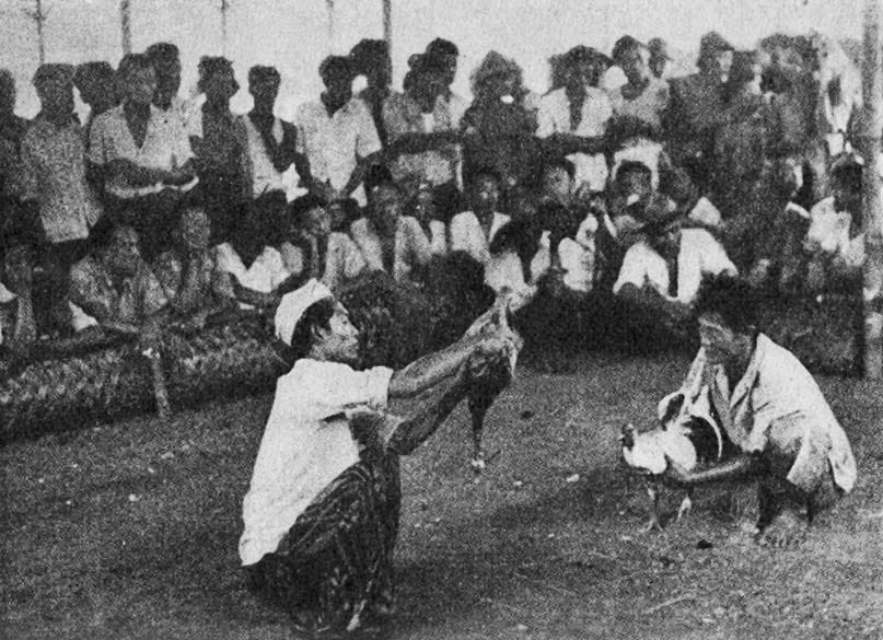 Deep Play: Notes on the Balinese Cockfight - Wikipedia