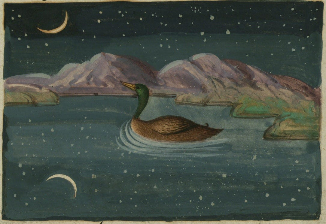 illustration of duck under night sky from the Lights of Canopus