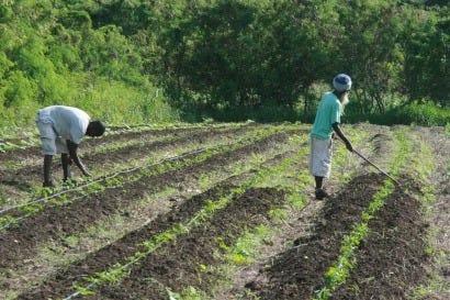 antigua_and_barbuda_farmers.jpg