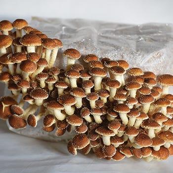 outdoor & Indoor Grow Your Own Mushroom Kits
