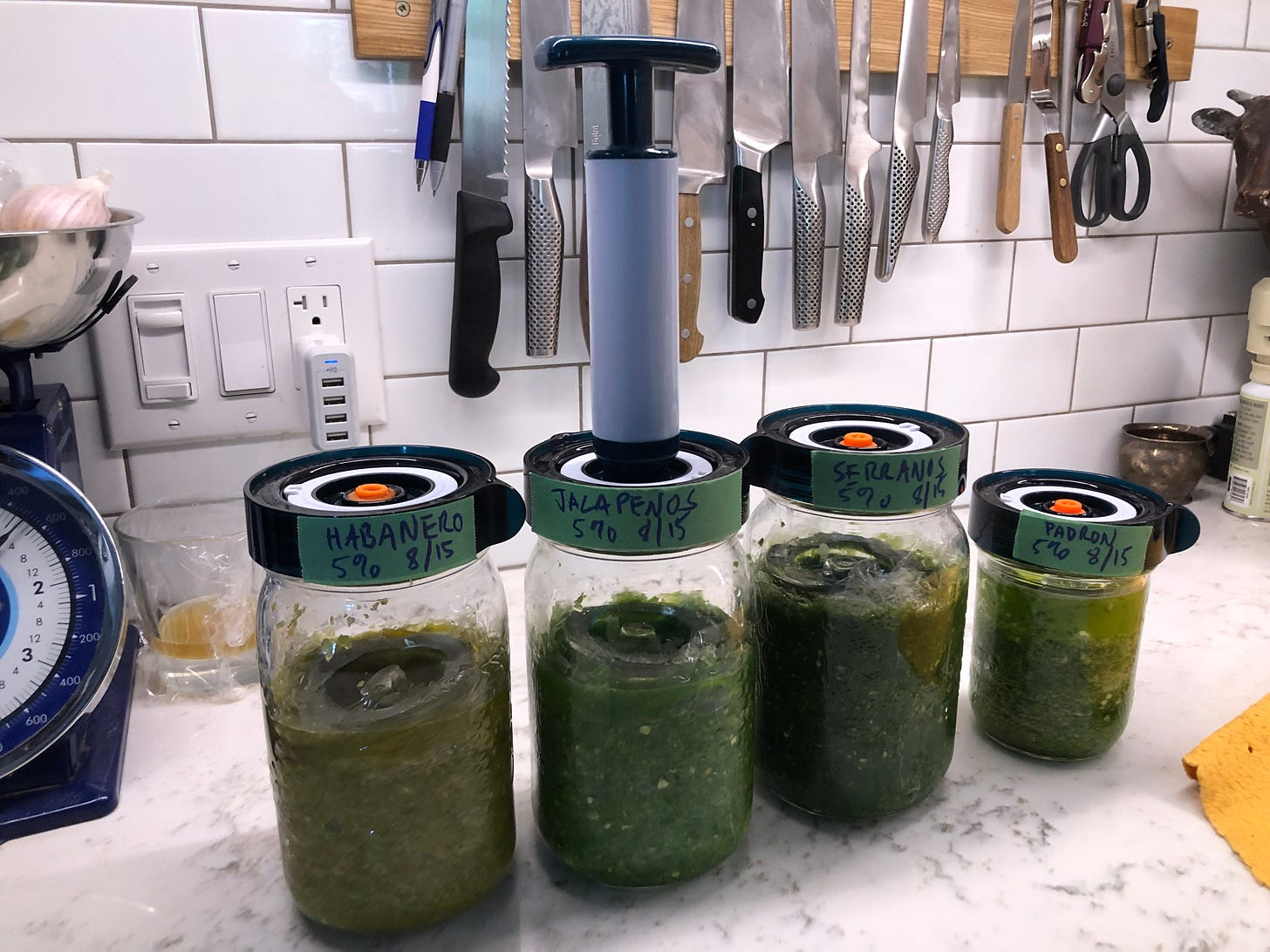 A row of jars holding various chile mashes. They are labelled Habanero, Jalapeño, Serrano, and Padron. All are dated August 15th. There is a hand pump attached to the lid of the Jalapeño jar.